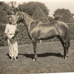 Cavalo com o a marca da suástica - Fazenda Santa Albertina