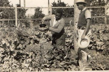 Dois na plantação da fazenda Santa Albertina